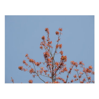 Blossoms in the blue sky postcard