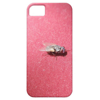 Blow fly insect on red iPhone 5 case