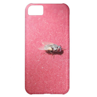 Blow fly insect on red iPhone 5C case