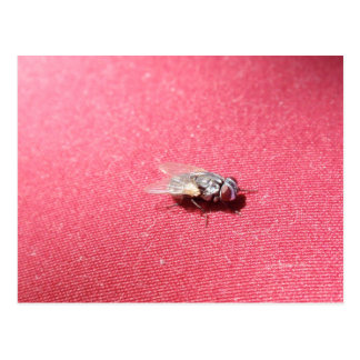 Blow fly insect on red postcard