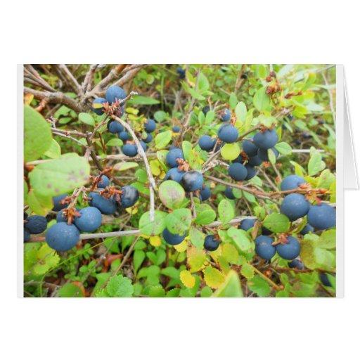 blu berries cards