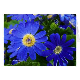 Blu Daisy Card