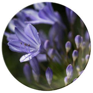 Blue Agapanthus Flower Porcelain Plate