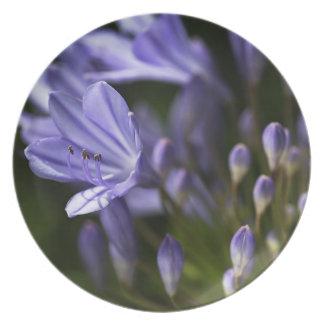 Blue Agapanthus Melamine Plate
