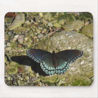 Blue and Black Butterfly Mouse Pads