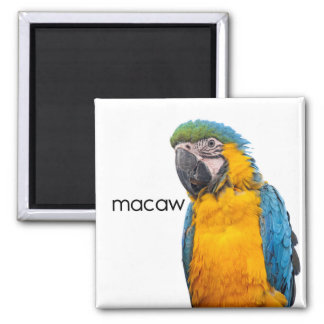 Blue and Gold Macaw Bird Magnet