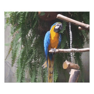 Blue and Gold Macaw Bird Photo Print