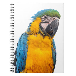 Blue and Gold Macaw Notebook