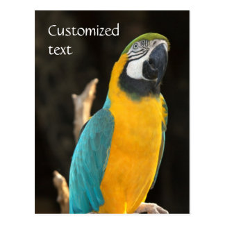 Blue and Gold Macaw Postcard