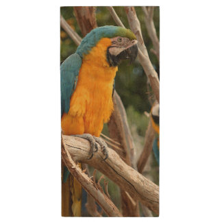 Blue And Gold Macaw Wood USB 2.0 Flash Drive