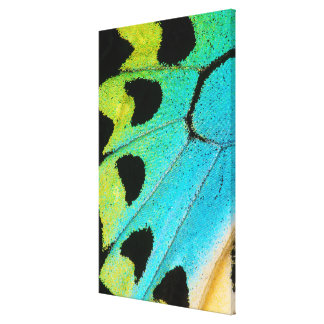 blue and green butterfly wing canvas print
