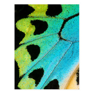 blue and green butterfly wing postcard
