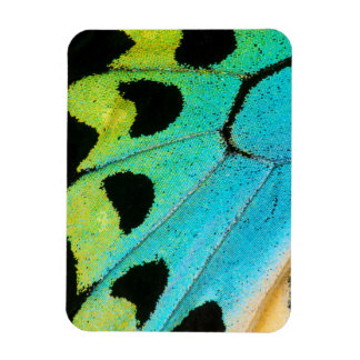 blue and green butterfly wing rectangular photo magnet