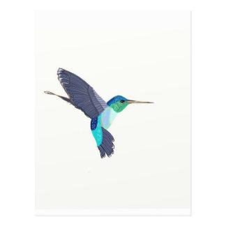 Blue and Green Humming Bird Postcard
