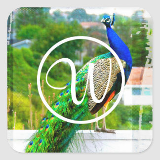 Blue and green peacock photo custom monogram square sticker