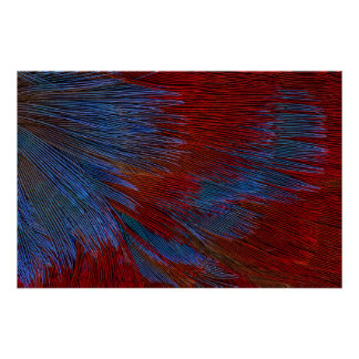 Blue And Red Feather Abstract Poster