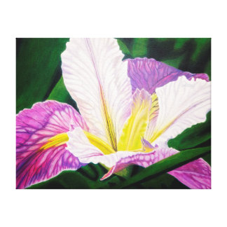 Blue and White Hybrid Iris Canvas Print