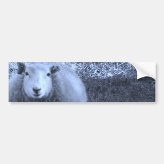 Blue and White  Mother sheep Bumper Stickers