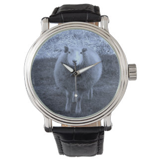 Blue and White  Mother sheep. Watch