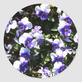 Blue and White Pansies Stickers