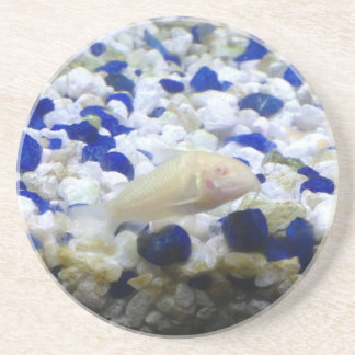 Blue and white pebbles and Albino cat fish Coaster