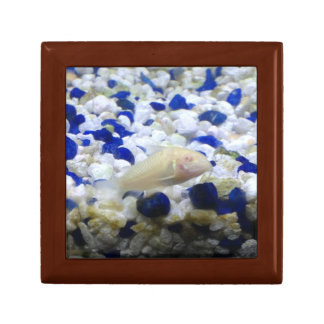 Blue and white pebbles and Albino cat fish Gift Box