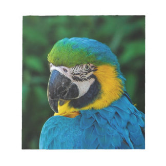 Blue and Yellow Bird Notepad
