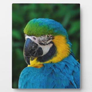 Blue and Yellow Bird Plaque