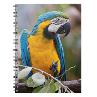 Blue and Yellow Macaw Notebook