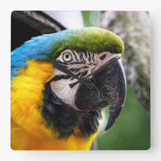 Blue and yellow macaw square wall clock