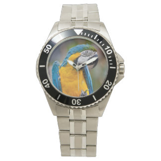 Blue and Yellow Macaw Watch
