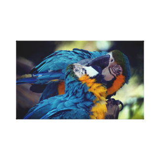 Blue and yellow macaws canvas print