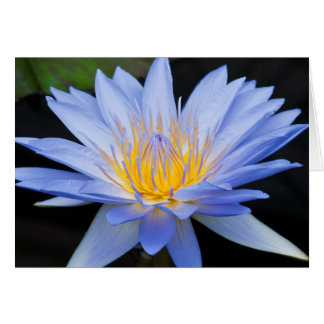 Blue and Yellow Water Lily Blank 5x7 Greeting Card