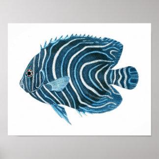 Blue Angel Fish Coastal Wall Art Decor Poster