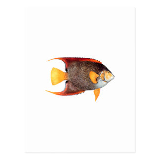 Blue Angelfish (saltwater) Postcard