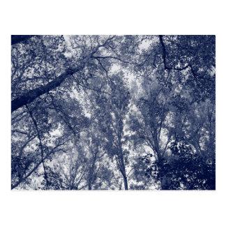 Blue Autumn Postcard