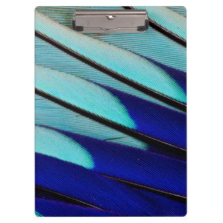 Blue-bellied Roller feathers Clipboard
