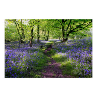 Blue bells forest, Scotland Poster