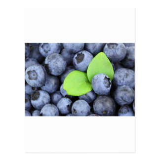 Blue Berries Fruit Peace Love Destiny Party Art Postcard