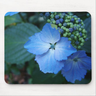 Blue bigleaf hydrangea flowers mouse pads
