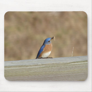 Blue Bird Breakfast Mouse Pad
