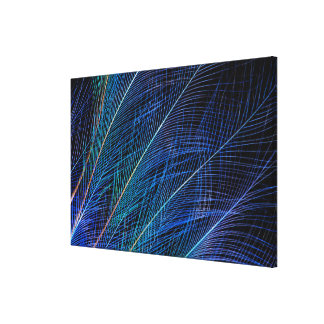 Blue Bird Of Paradise Feather Abstract Canvas Print