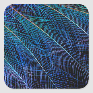 Blue Bird Of Paradise Feather Abstract Square Sticker