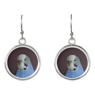 Blue Budgie Bird Animal Earrings