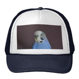 Blue Budgie Bird Parrot Cap