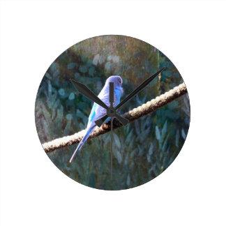 Blue Budgie Clocks