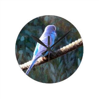 Blue Budgie Round Wallclock
