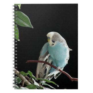 Blue Budgie Notebook, Parakeet Stationery Notebook