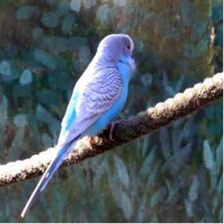 Blue Budgie Photo Cutouts
