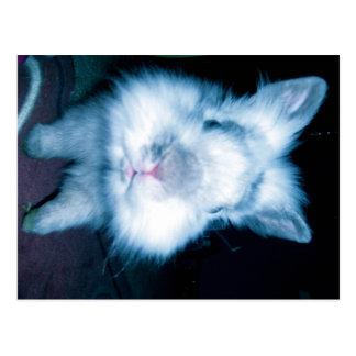 blue bunny postcard